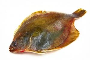Камбала с/г желтое брюшко свежемороженая вес